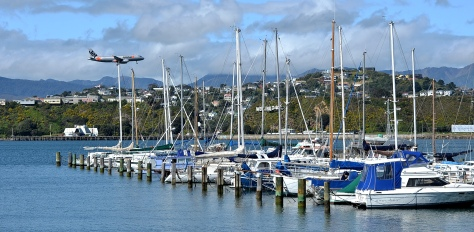 Evans Bay Marina