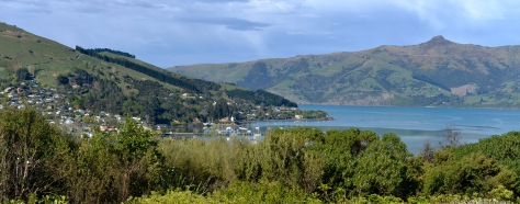 The view out of the front window at our site in Akaroa.