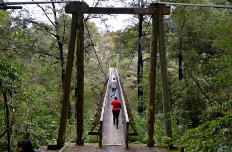 Pelorus suspension bridge
