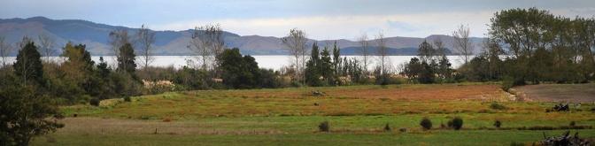 Looking over lake Waikare