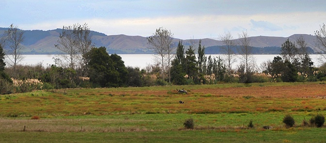 Looking over lake Waikare