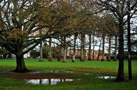 A bit wet but nice park environment
