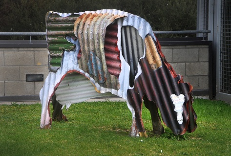 Corrugated Cow on the roof