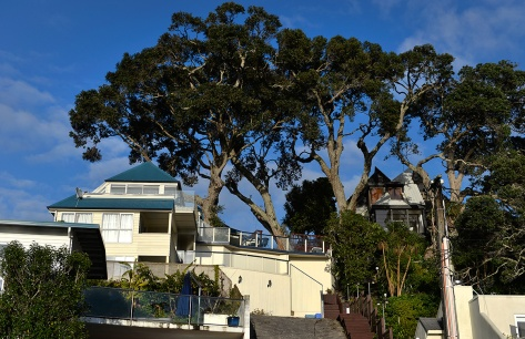 The trees .. the one on the left was leaning on the house, the other two had borer