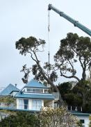inga-trees