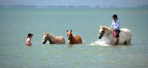 The local horses came down for a swim too