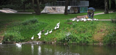 The pied piper of Echternach .. feeding the Geese.