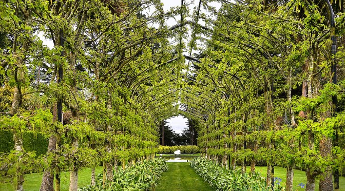 Larnach's Garden