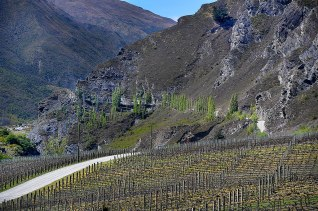 The road through the vineyard through the Kawarau Gorge
