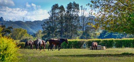 The Horses feeding next door
