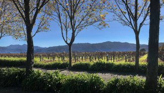 Allan Scott's Vineyard