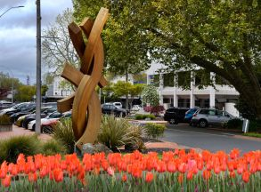 Rotorua Central.. check out those Tulips