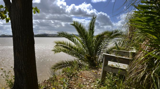 The Lookout Bench at Dargaville