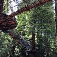 Redwood Forest Treewalk and Ride