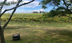 Great view at Te Awhanga